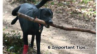 How To Train Your Dog - 6 Important Dog Training Tips For Obedience Training