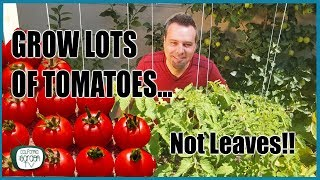 Video Grow Lots of Tomatoes... Not Leaves // Complete Growing Guide MP3, 3GP, MP4, WEBM, AVI, FLV Juni 2019