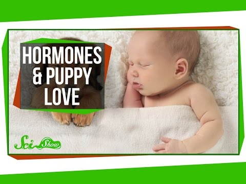 Hormones and Puppy Love
