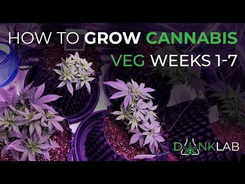 How To Grow Cannabis Week 1 - 7 Veg Cycle Catchup - Indoor Home Grow Season 1- Dank Lab