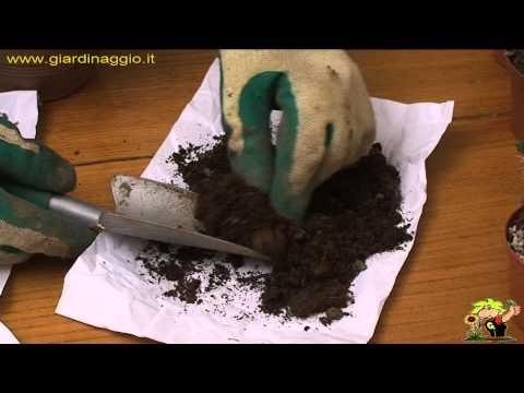 come si trapiantano le piante grasse