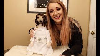 Video My Dogs Try On Halloween Costumes MP3, 3GP, MP4, WEBM, AVI, FLV Juli 2018