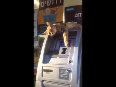 「錢都是我的!」霸王貓佔據ATM 不讓人插卡