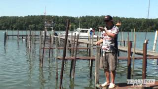 Skipping from Dock to Dock for Bass