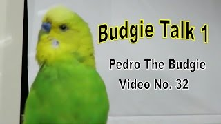 Our Budgie Pedro mimic hundreds of words. In this video, he's rambling on about being a good boy. sexy birdie, going out and getting lots of kisses and so much more..... Due to popular requests, Pedro now has his own channel where it will feature a lot of Vlogs, Budgie DIY's and also his regular entertaining videos. Hope to see you there.About this Channel - https://www.youtube.com/user/Careneri/featured?view_as=publicMore PEDRO the Budgie - https://www.youtube.com/playlist?list=PLKz21al88ViEmoVtph1ZjkyGfMchZFcgUHow to Find Gold and Gems - http://www.youtube.com/playlist?list=PLKz21al88ViGnuqq5sYBjuBthfKPhRNGOJewelry Making Tutorials - http://www.youtube.com/playlist?list=PLKz21al88ViEih85hG7ZiSZIYQmsv6WV0Liz Kreate Recipes - http://www.youtube.com/playlist?list=PLKz21al88ViFhoAEfZDfOtHqrQqBllUuXLAPIDARY Gem Cutting  - https://www.youtube.com/playlist?list=PLKz21al88ViFknwDrLvXnyCXL_PaOuago