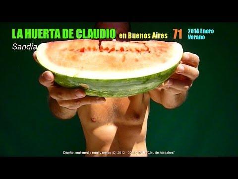 siembra de sandia - Correo de Claudio Madaires: huertadeclaudio@gmail.com Saludos a todos, desde Buenos Aires. En este canal, todo para el cultivo orgánico en casa, usando la me...