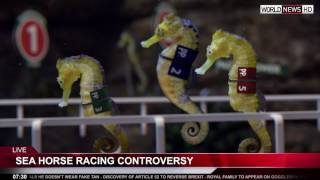 Paddy Power is sponsoring the new equine-aquatic sport of Seahorse Racing - taking sports betting and entertainment to new depths with all the excitement of horse racing - but underwater.