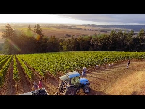 Willamette Valley, Oregon - Wine Region of the Year