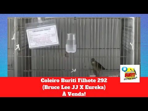 Galeria de Vídeos Coleiro Buriti Filhote 292