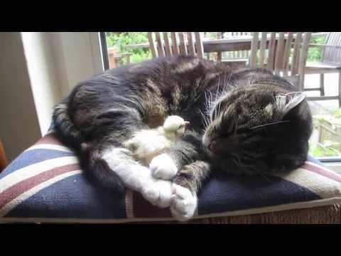 WATCH: Chick sleeps on cat