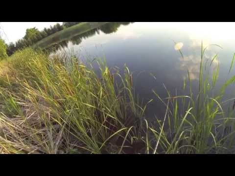 Pond Bassin with a surprise walleye and catfish 7/23/13