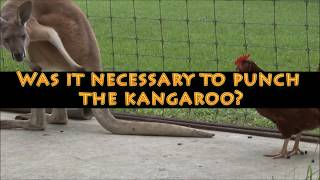 "In this video we take a look at some boxing kangaroos and we discuss a particular case where a man punches a kangaroo.  Please take a moment and subscribe for more kangaroo videos every single week!!  We hope you enjoy this unique animal video that includes some of nature's coolest animals... particularly the kangaroo!  WOW!  Subscribe:  https://www.youtube.com/channel/UC7lZW4rHx7zcclvlsSdfTew?sub_confirmation=1Patreon:  https://www.patreon.com/WGAThank you for taking a moment and watching our videos.  Please subscribe for more original content from World's Greatest Animals!  Click like if you support our efforts!  In our hearts and souls,  we love animals.  We absolutely adore them, and I won't want to see any sick or exploited.   If you enjoy wildlife, zoos, animal education and the field of zoology, please tell us about that in a comment below.  If you like this, then check out....Worst Animal Bites:  https://www.youtube.com/watch?v=pu5vPT58iyABest Eagle Attacks:  https://www.youtube.com/watch?v=we6x7BOVTBY&list=TL82R-nPBOVqIPit Viper Bite:  https://www.youtube.com/watch?v=tSrG_ixLcDI&list=PLStbaH0Y-uZv1mMttyJLY0J1wq_WWAqHNMango Worms: https://www.youtube.com/watch?v=yJZ_M6xxNvk&index=4&list=TL82R-nPBOVqIWorst Spider Bites:  https://www.youtube.com/watch?v=vfAISERVAqA&list=PLStbaH0Y-uZskl1mk8xTagw_GlpLRJtuKIf you would like to support us, bookmark our Amazon link.  Use it when you buy from Amazon.  It will cost you nothing, but we will get a small benefit from Amazon:  http://www.amazon.com/?tag=wrestling911c-20   Thanks!We are always looking for commercial sponsors, and we have partnership deals starting at $100.  If you would like to propose a partnership with us, please send a direct message to World's Greatest Animals or email us at billing@911wrestling.com  Gorilla Store:  http://astore.amazon.com/wrestling911c0e-20Want more?  Read my book.  ""How to make your first $100,000 on YouTube.""http://www.amazon.com/dp/B00XWBCOQC/?tag=wrestling911c-20Note:  If something in this video offends you or you believe should be taken down, email us at billing@911wrestling.com Check out Grillbot... The first cleaning robot for your grill:  http://amzn.to/2nsIh8Y"
