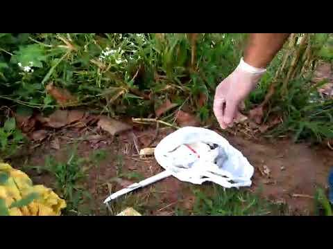 Vídeo: Acusado de duplo homicídio em Penedo leva polícia a local onde jogou armas usadas no crime