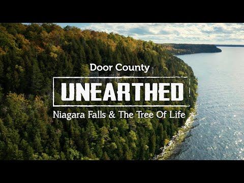 Niagara Falls & the Tree of Life