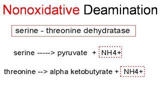 Nonoxidative deamination