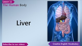 The Human Body, English Vocabulary Lesson 11