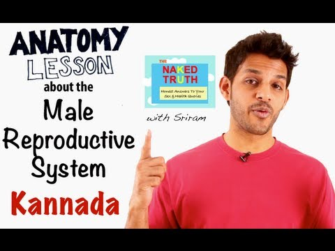 Video Male Reproductive Anatomy Lesson - Kannada download in MP3, 3GP, MP4, WEBM, AVI, FLV January 2017