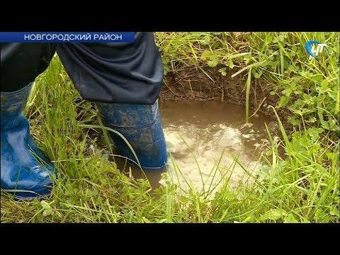 Владельцы участков возле деревни Хутынь Новгородского района жалуются на подтопления
