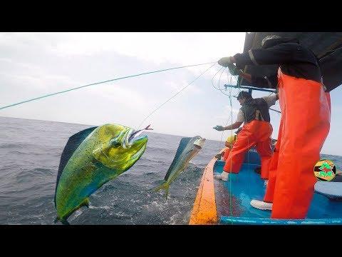 Videos caseros - PESCADORES USAN PEZ VOLADOR PARA PESCAR DORADOS PERICOS - Pesca en Alta Mar
