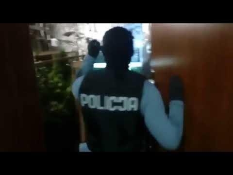 Wideo1: Nielegalna plantacja konopi indyjskich pod Rawiczem