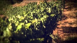 Vale da Raposa - Vinhos a Bordo TAP