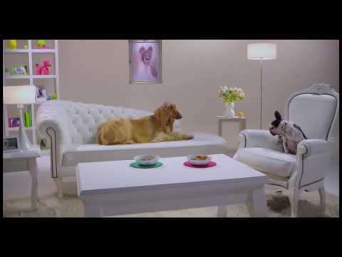 Comercial para Clight - Zoofilms