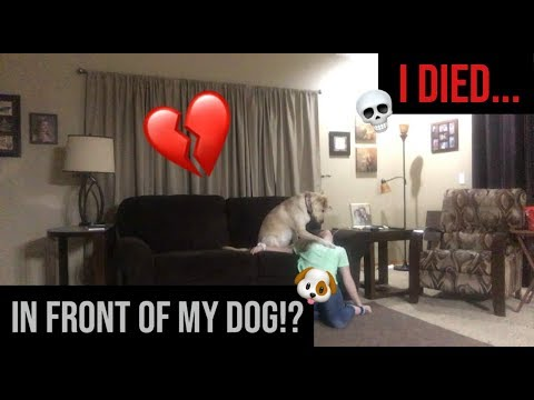 i died in front of my dog!? *CUTEST REACTION*