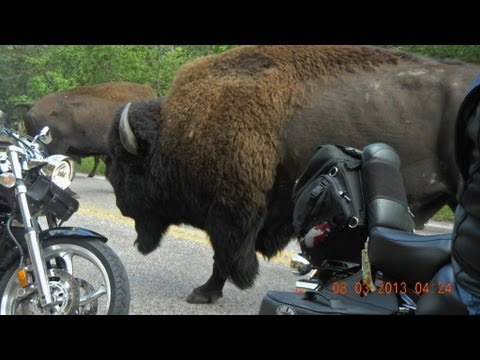 Buffalo - To use this video in a commercial player or in broadcasts, please email licensing@storyful.com Turn your sound up! Ben and Karen Queen, Jeff and Cherie Munro...