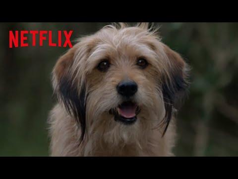 Benji's Clever Plan | Benji | Netflix Futures