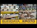 foto Budidaya Kroto Media PARALON, TOPLES dan BAMBU ( Full Materi) - fauzzan daily