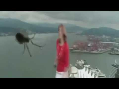 Huge Spider Scares News Caster | TV Blooper | America's Funniest Viral Videos