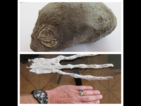 Two Strange Organic Artifacts Found In The Desert Of Nazca In Peru