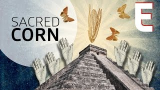 Why Corn is The Most Sacred Crop — Forklore by Eater
