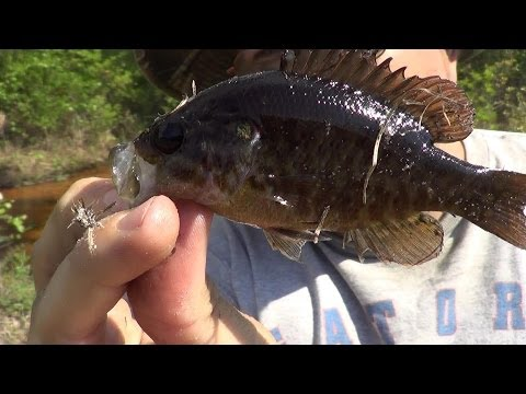 Survival Fishing – Small Panfish