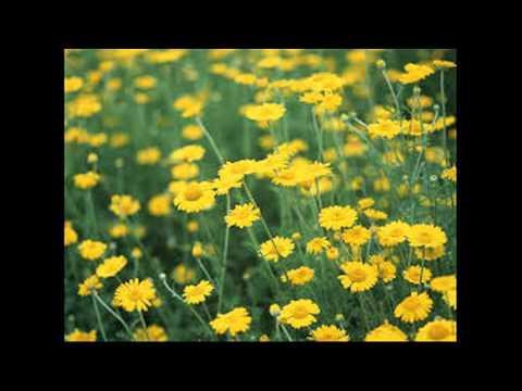 Nhớ về một mùa xuân -Trung Nghĩa