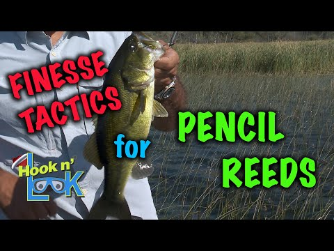 Finesse Tactics for Largemouth Bass in Pencil Reeds.Finesse Tactics for Largemouth Bass in Pencil Reeds.<media:title />