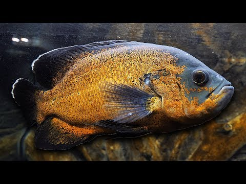 I CAN'T BELIEVE the GIANT Fish in this HIDDEN Pond!!! (Epic Bank Fishing) - Thời lượng: 13 phút.