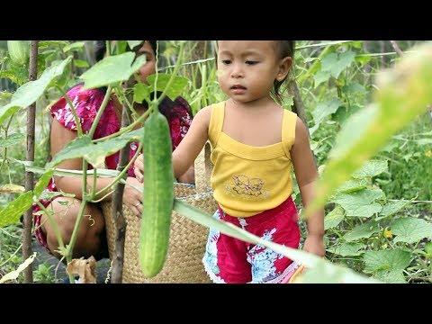 Balita Lucu Panen Timun dan Buah Kelengkeng di Kebun Sendiri - Kids Harvesting Cucumbers