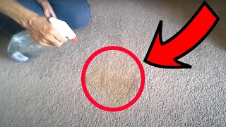 How to clean a spot on carpet