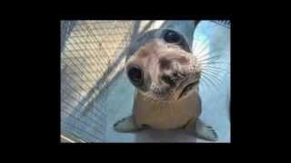 Video Stříbrný Rafael - Luboš je ředitel zoo