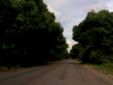 Túnel de Árvores - Campo Alegre / São Miguel dos Campos