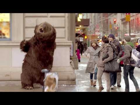 Hungry bear loose in NYC !