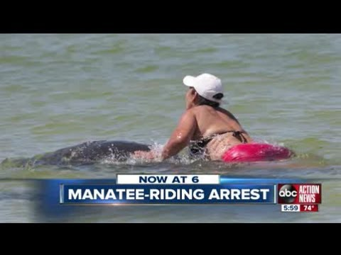 Video Family appalled by arrest of manatee riding woman download in MP3, 3GP, MP4, WEBM, AVI, FLV January 2017