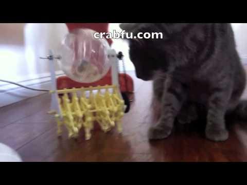 robot alimentato a criceti