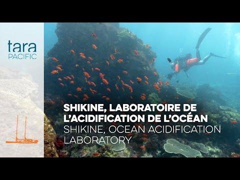 化解珊瑚礁危機 日本火山島可能是關鍵[影]