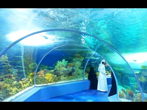 Tour At Fakieh Aquarium In Jeddah !!!! FULL HD!!