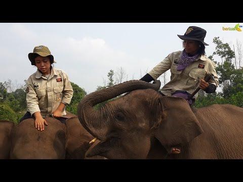 Ekowisata Taman Nasional Tesso Nilo