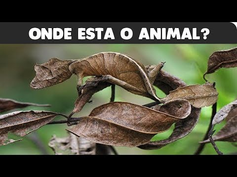TESTE: ONDE ESTÃO OS ANIMAIS CAMUFLADOS!!