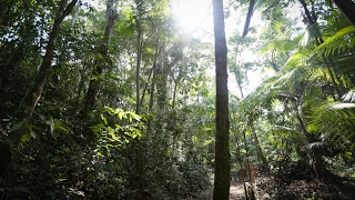 The amazon genome project