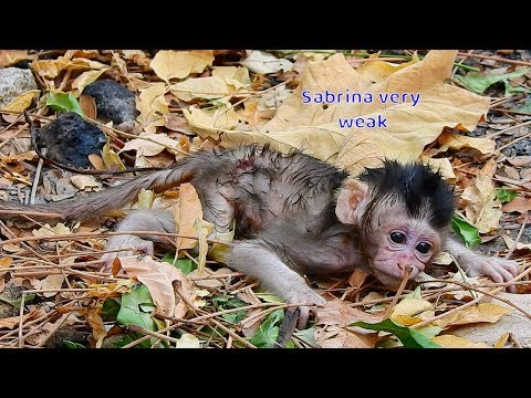 Orphan Baby Sabrina Cry Until No Sound - Poor Baby Cry Very Hungry Milk